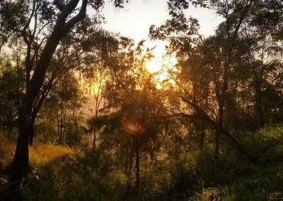 Sun-through-the-trees-151004