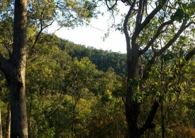 Arborlon in the trees