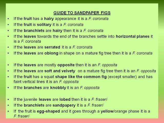 Distinguishing sandpaper varieties of fig