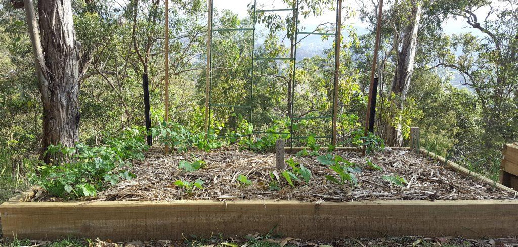 calcium-rich-garden-bed