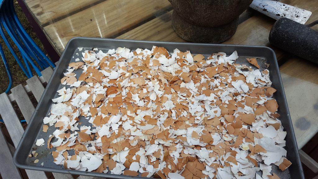 dried-egg-shells