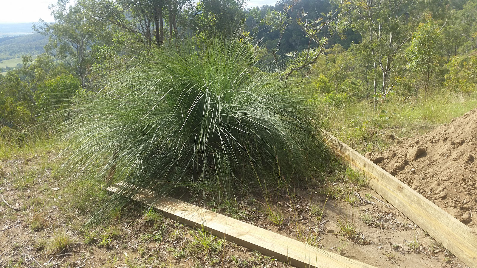Fire Deck - Grass Tree