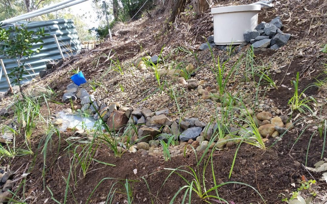 Building a Grey Water Filter Pond – 28th July 2016
