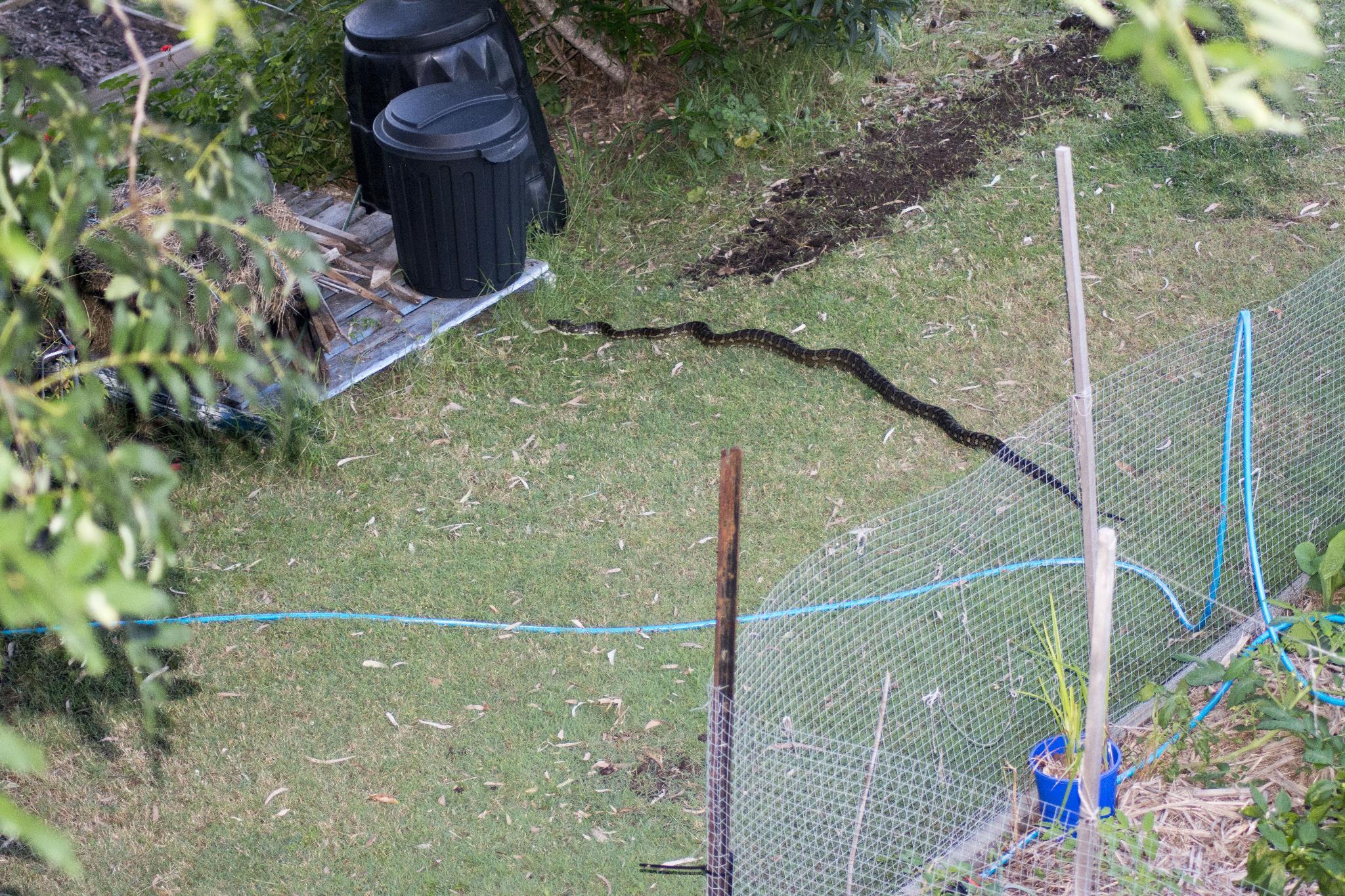 Carpet Python on the Plot Level