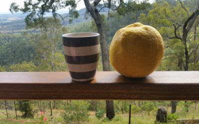 Now that's a Lemon! – 7th August 2017