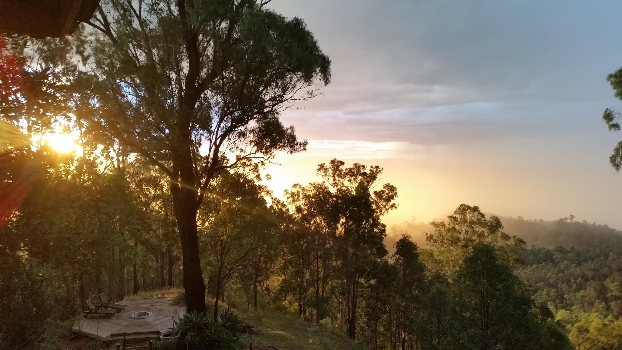 Narrow-leaved Ironbark - Eucalyptus crebra
