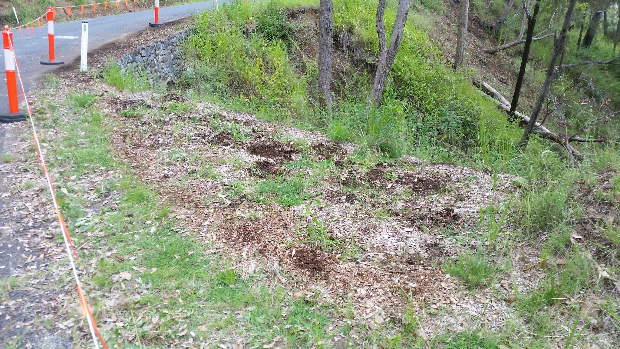 Removing tree plantings before road repairs.