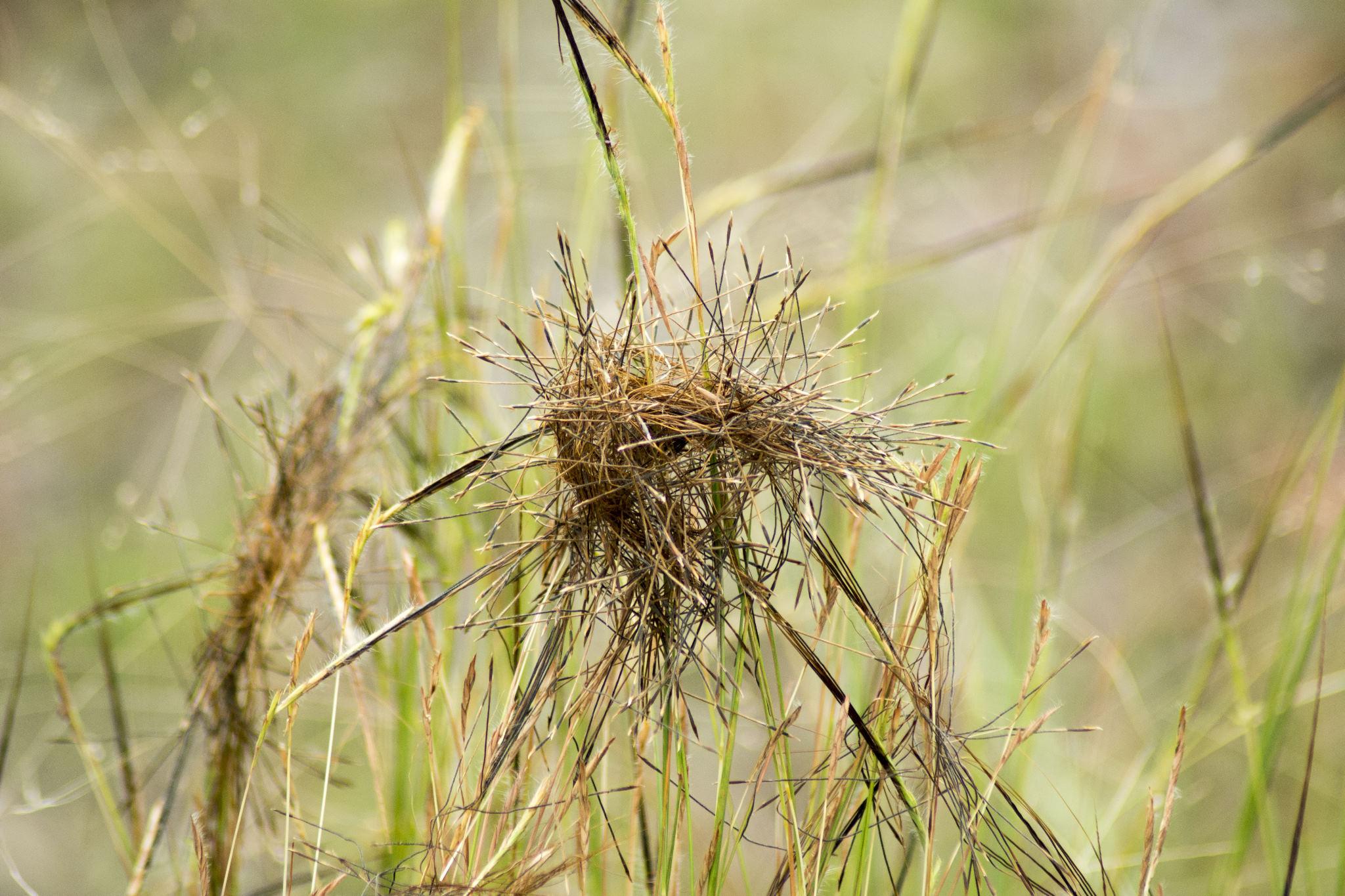 Crazy-Grass-01