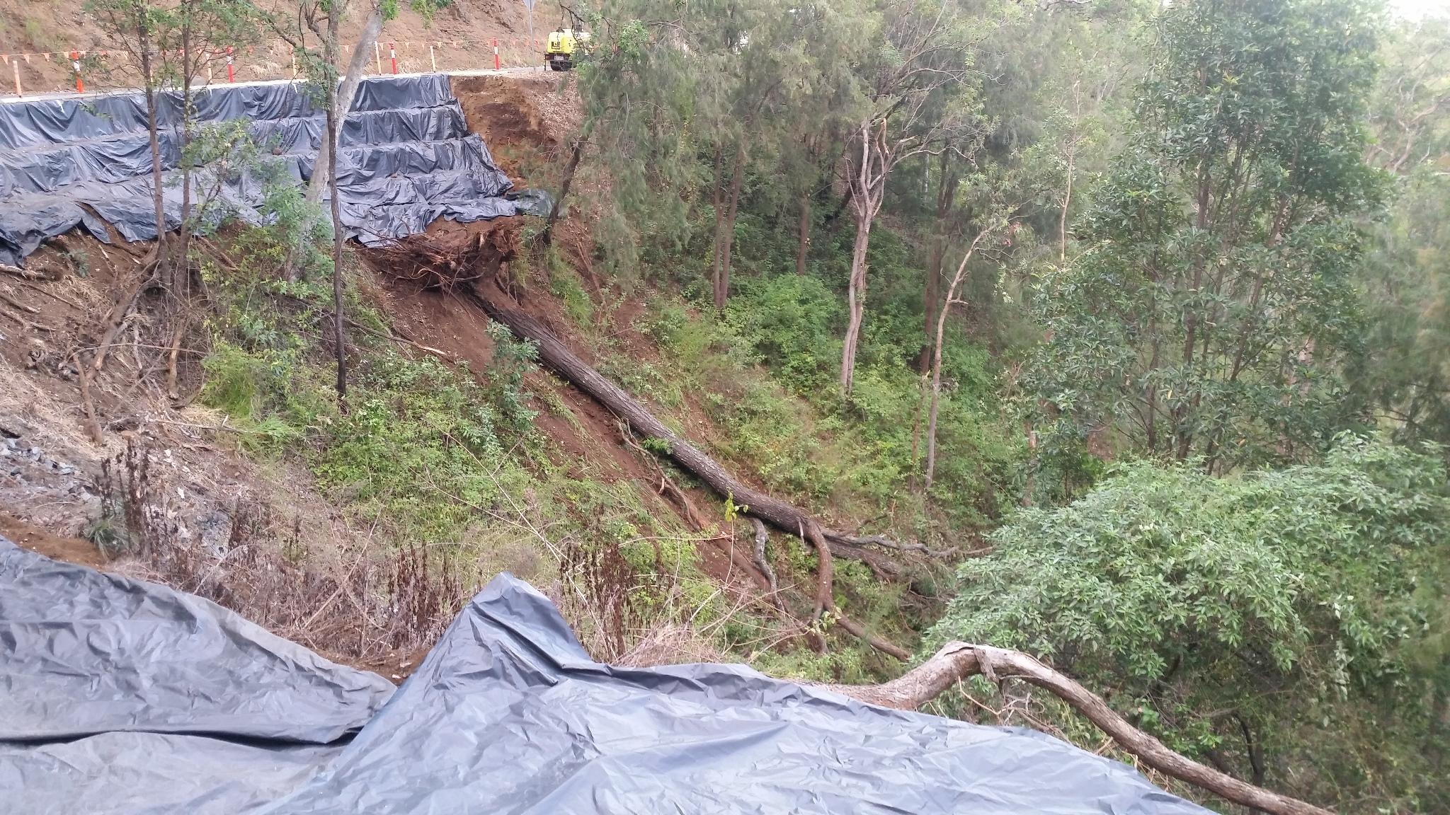 Fallen Ironbark