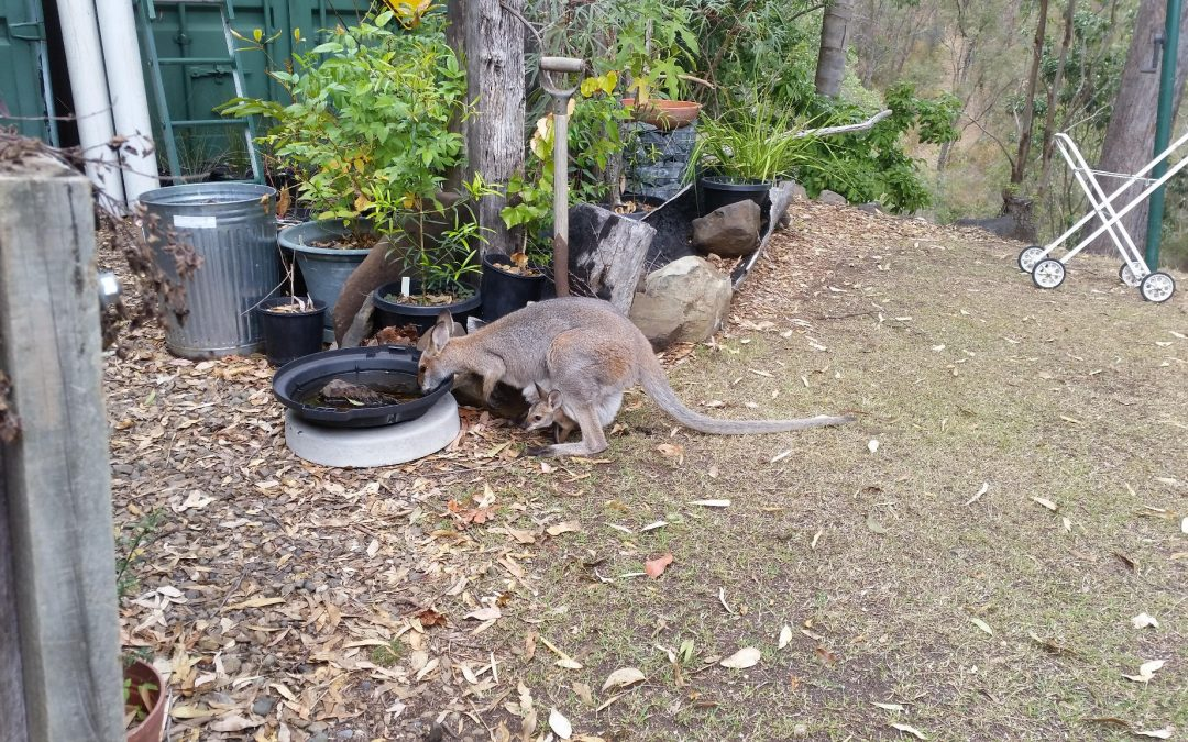 PVC Pipes, Possums and Goannas – 20th November 2018