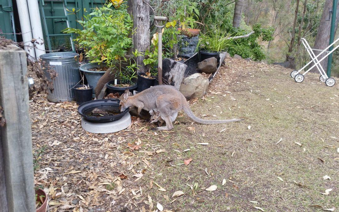 PVC Pipes, Possums and Goannas – 20th November 2018