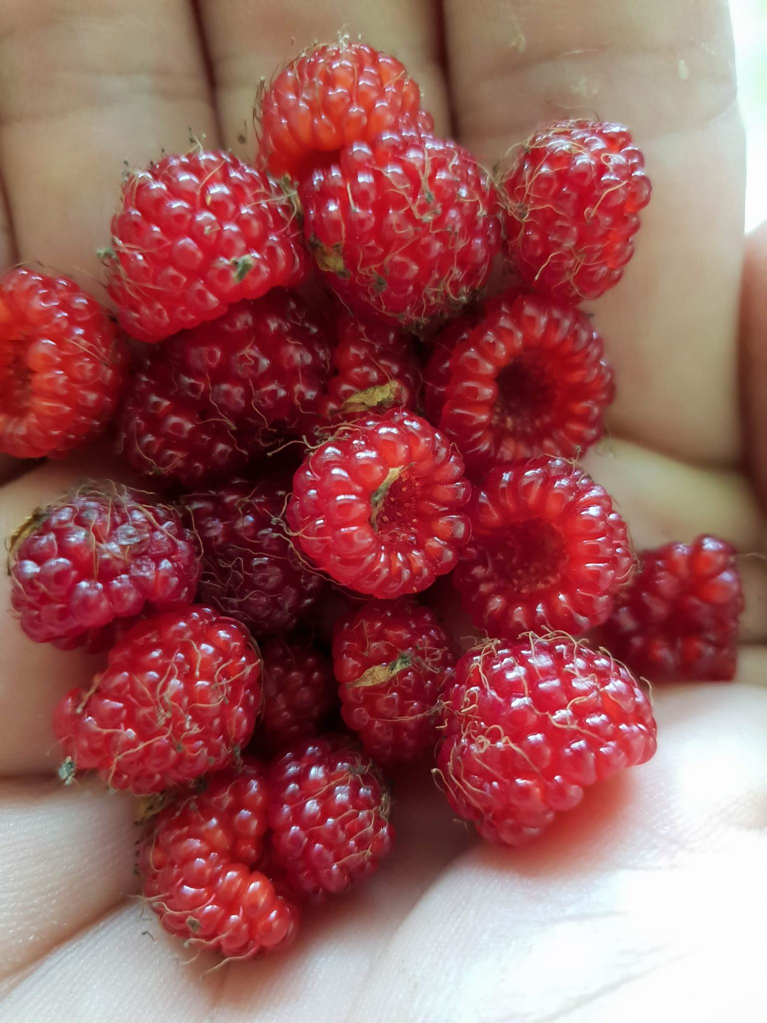 Native Raspberries