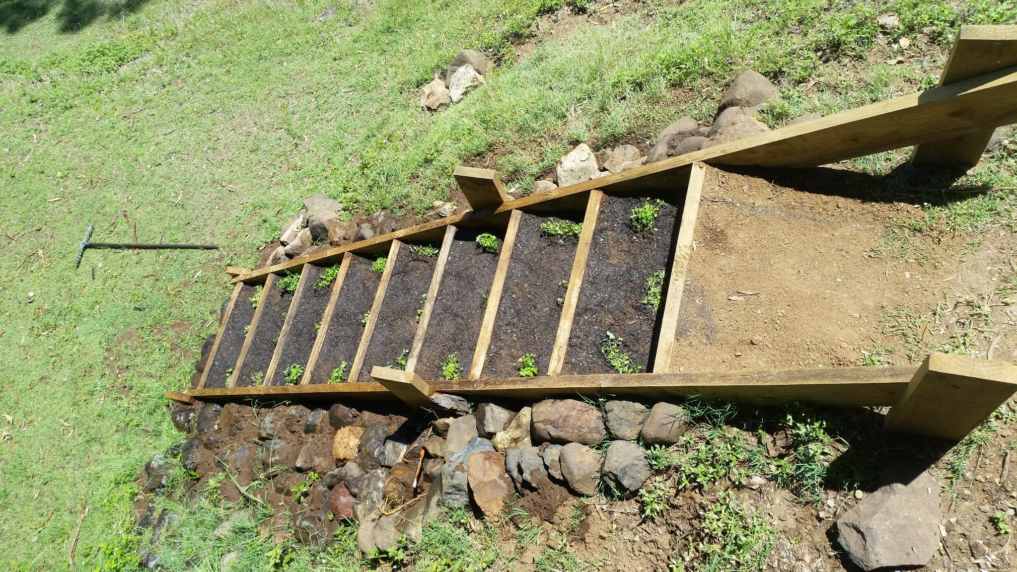Mushroom soil layer and plantins in stairs.