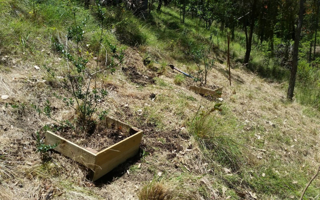 Planting the Orchard – 26th December 2015