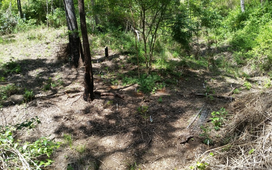 Planting the South Gully #2 – 18th March 2016