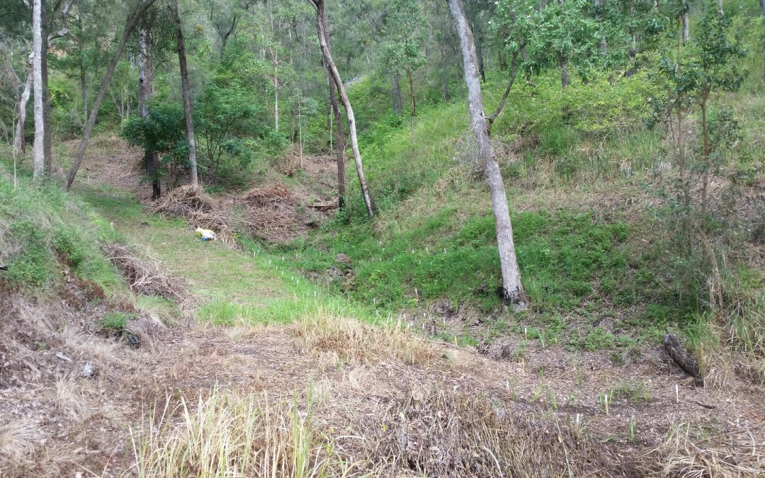 Planting the South Gully – 1st March 2016