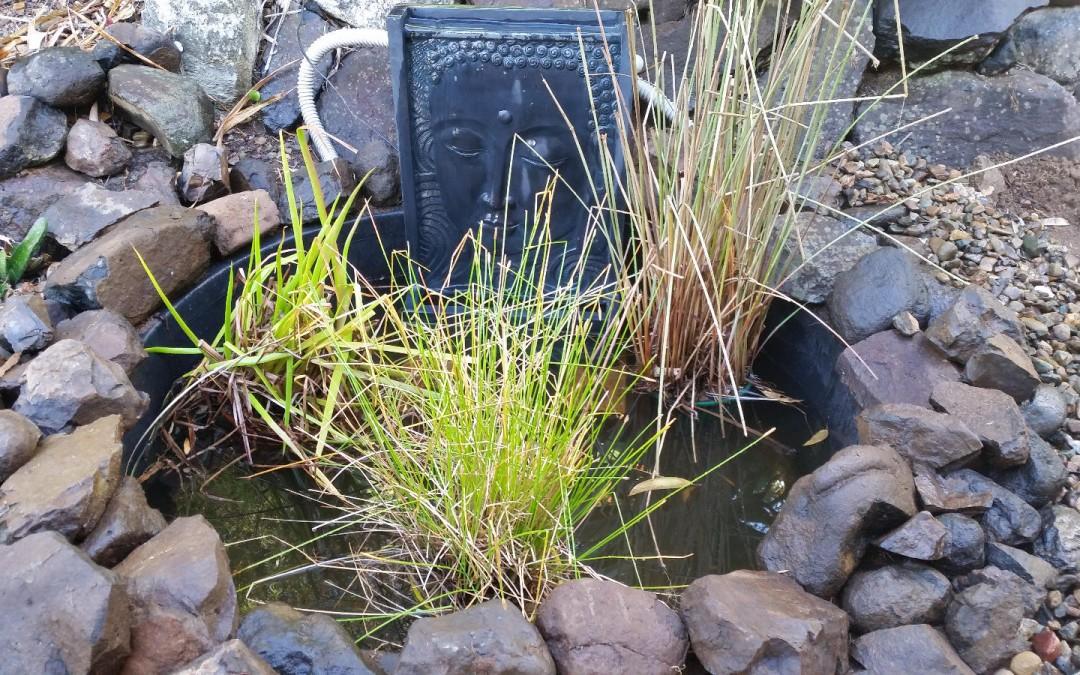 Adding a Water Habitat – 28th September 2016