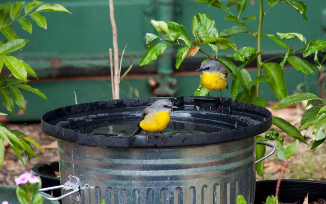 Encouraging birds to the backyard – 29th April 2016