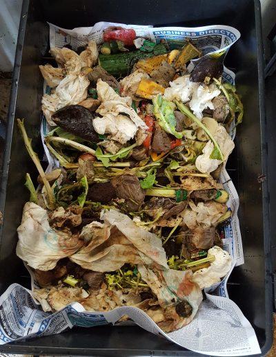 Feeding Worms Veggie Scraps