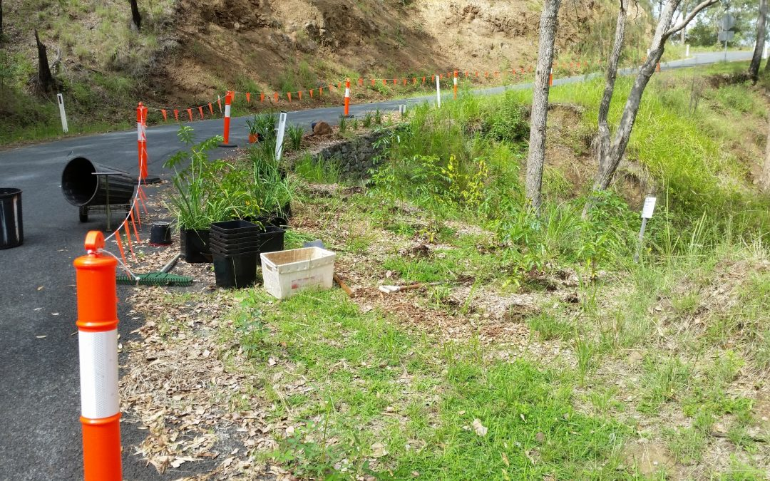 Taking Up Road Plantings – 2nd March 2018