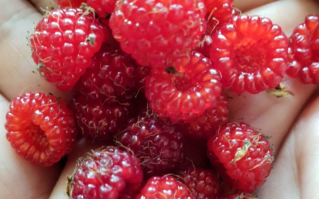 Native Raspberry Spritzer – 13th January 2019