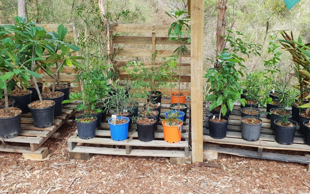 New Nursery Site is Up  – 19th April 2019