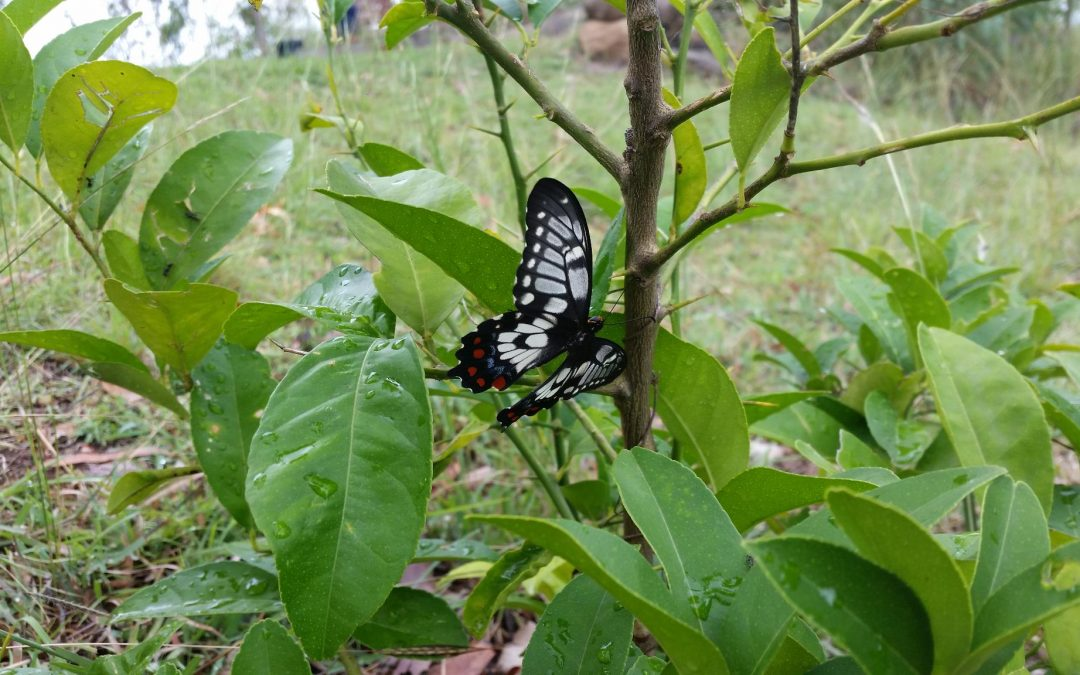 Lots of Butterflies – 10th January 2019