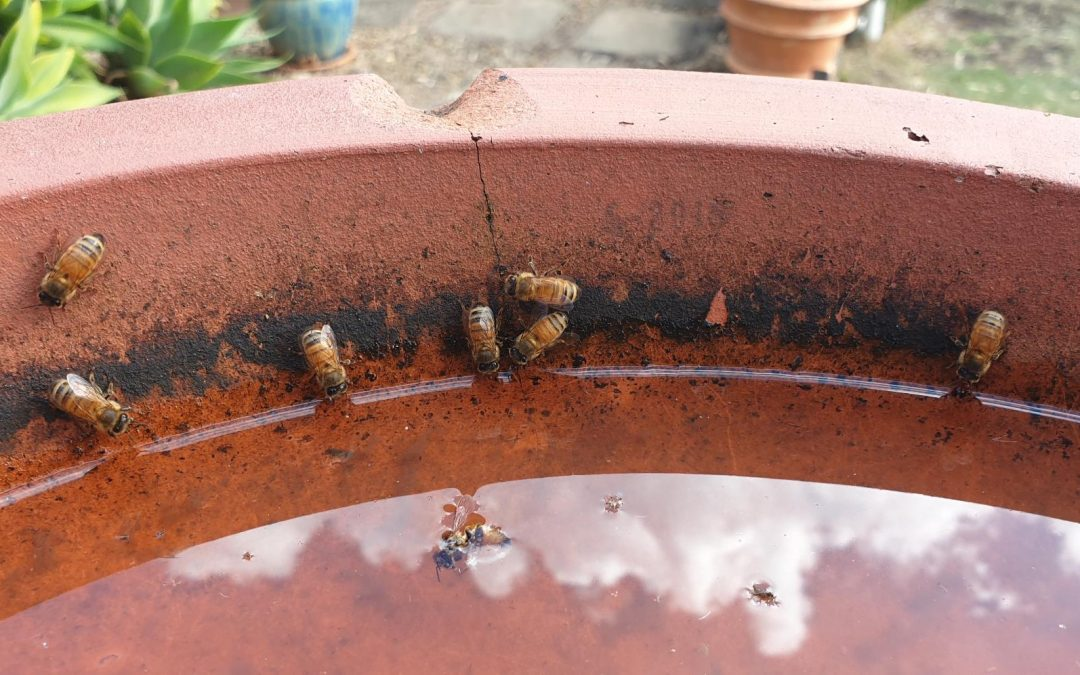 Bees and Water – 1st June 2019